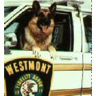 Westmont: Retired Westmont Police Dog