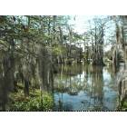 Lafayette: cypress swamp at the University of Louisiana at Lafayette