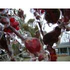 Gaffney: Bad Ice Storm Late 2005