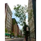 St. Louis: : Washington Loft District 1