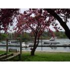 Mamaroneck Harbor in the spring