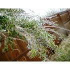 Lonoke: Fallen tree branch due to ice storm