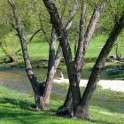 Salado: April visitor to Salado Creek