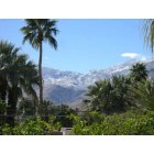 Palm Springs: Mountains turned gree from rain