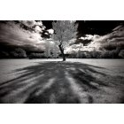 Goshen: An infrared picture of a tree in Goshen, Utah.