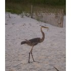 Port St. Joe: Fine Feathered Friend