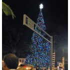 Delray Beach: Delray Beach Christmas Tree