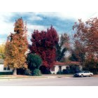 Bakersfield: Bakersfield Fall Color
