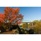 Oroville: feather river fall colors