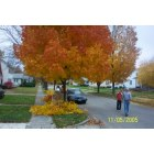 Gibsonburg: Tree Commission maintaining trees