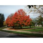 Latrobe: Fall at Legion Keener Park