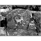 Tucson: Ancient petroglyphs at Picture Rocks Sanctuary...