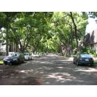 South Pasadena: Shady street of residential neighborhood in South Pasadena, CA