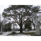 Lansing: A beautiful tree in the Mt. Hope Cemetery in Lansing, Michigan.