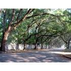 Tree covered street in St. Augustine
