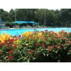 Highland Park: the flowers around the city pool are wonderful and very colorful.