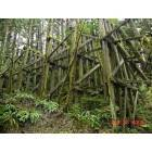 Vernonia: trestle coming out of town from old saw mill