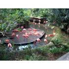 Tampa: Pink Flamingos