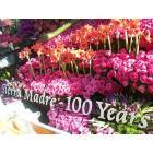 Sierra Madre: Our Rose Parade Award Winner, 07
