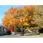 Fall on a Grove City street
