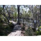 Marrero: Jean Lafitte State Park in Marrero, Louisiana ( cypress swamps)
