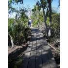 Marrero: Jean Lafitte State Park in Marrero, Louisiana ( Boardwalk )