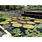 San Angelo: Lilly Pond