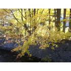 Gloversville: fall leaves over the creek