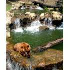 Montgomery: Bear at the Montgomery Zoo