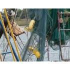 Brunswick: shrimper's cast