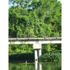 San Marcos: a blue heron perched in the san marcos river under the railroad bridge
