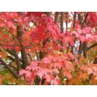 Waterbury: Waterbury Center, Fall foliage