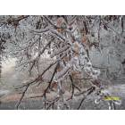 Springdale: Previous Ice Storm