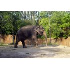 St. Louis: : Elephant doing its Thing