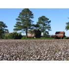Goldsboro: Old cotton farms
