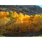 Spring Creek: Lamoille Canyon Shows its Fall Colors