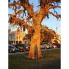 Mandeville: Sunset, Oak, Spanish Moss, Plantation, Lakefront, 10-19-2008