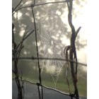Odenville: Spider web on back fence