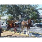 Mount Dora: Mount Dora Horse and Carriage