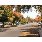 Stockton: My neighborhood in the fall