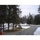 Kenai: Yard Moose