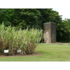 Koloa: Sugarcane & remnants of Old Koloa Sugar Mill