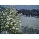 Harker Heights: Snow in Harker Heights