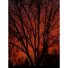 Brownfield: Back Yard Sunrise