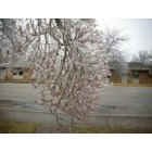 Jamestown: last years ice storm