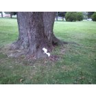 Chesapeake City: White squirrel