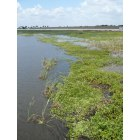 Okeechobee: Lake Okeechobee