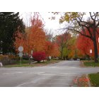 Naperville: Fall colors in Naperville Neighbourhood