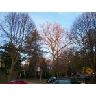 Chevy Chase Village: A view down Grafton Street, as trees that have already shed their leaves for winter catch the last rays of the setting sun, 4:36 pm, Nov 29th, 2009.