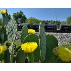 Irondale: CACTUS BED WITH TRAIN CARS IN BACKGROUND CITY HALL AREA